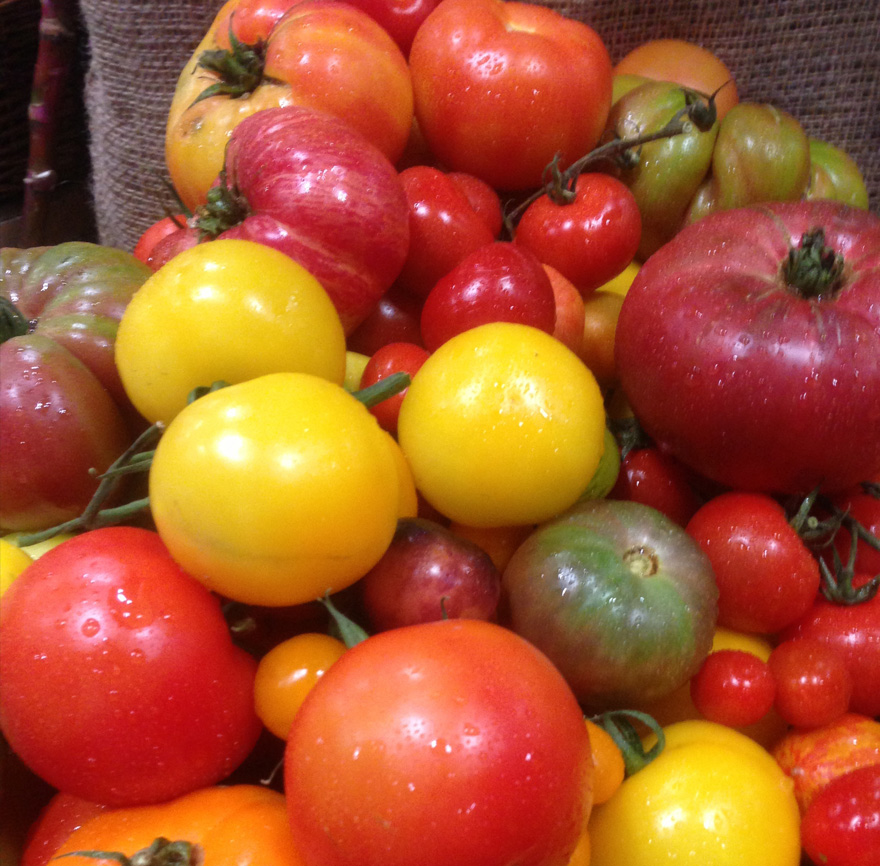 Variety of tomatoes in shapes, sizes, and colors